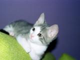 Pembe burunlu bi kedininardından…