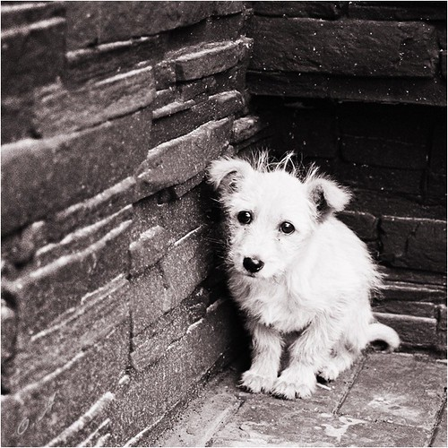 bricks,dog,white,alone,bw,fallen-3d5bf0e0e2f6a6c6c5706c8582be5289_h