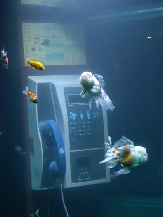 aquarium-telephone-booth-04